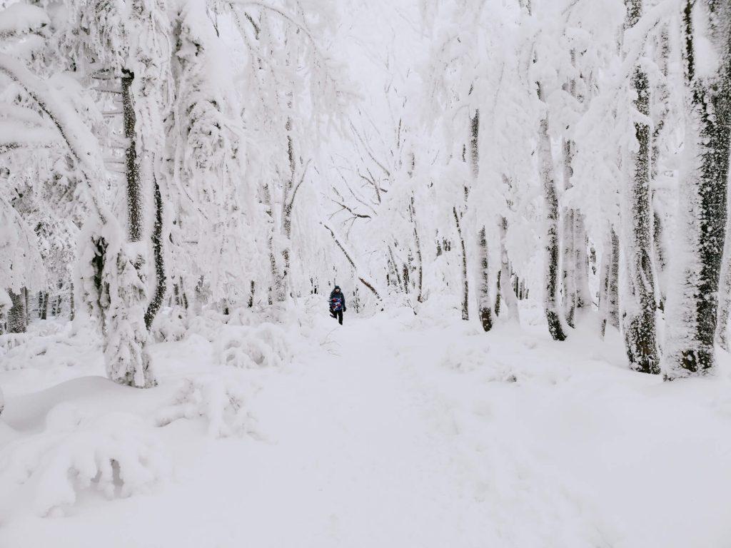 zima w lesie