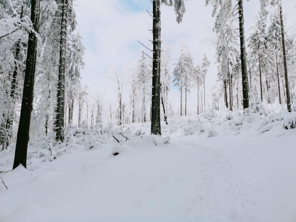 widok zimą