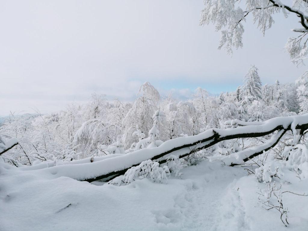 widok w górach zimą